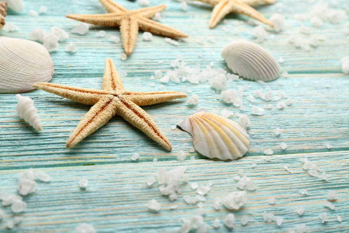 海の貝殻の画像